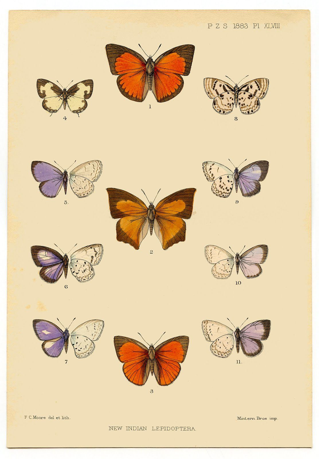 1a-butterflyprint-graphicsfairy004.jpg