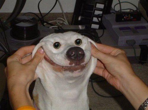 dog-smile.jpeg