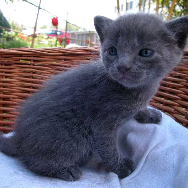 Chaton A Donner 59