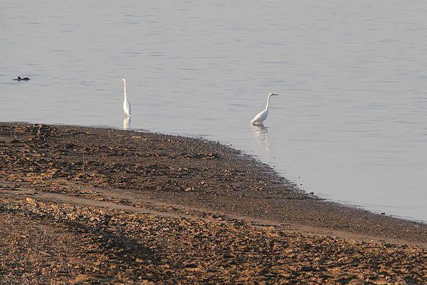 Les-Oiseaux-7 9711 - Oiseau