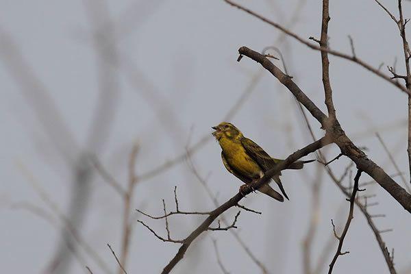 oiseau - 1030
