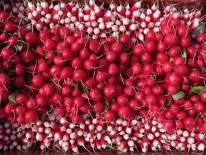 Que faire avec les radis roses ses fanes et ses graines - Cuisiner les radis roses ...