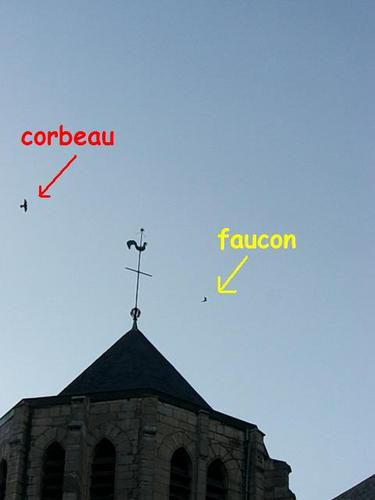 Faucon-vs-corbeau-3-OK.JPG