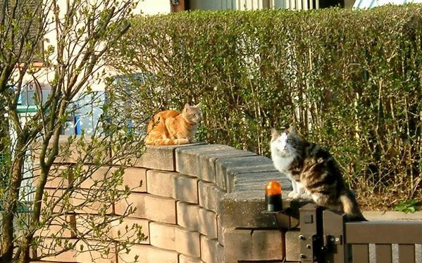 Copie-de-Chats-muret.jpg
