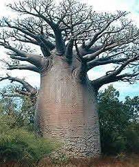 mon-arbre.jpg