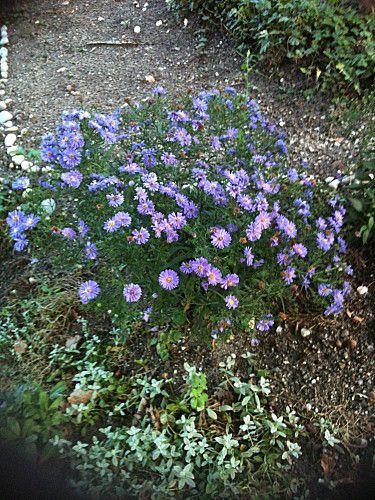 fleurs-jardin-0685.jpg