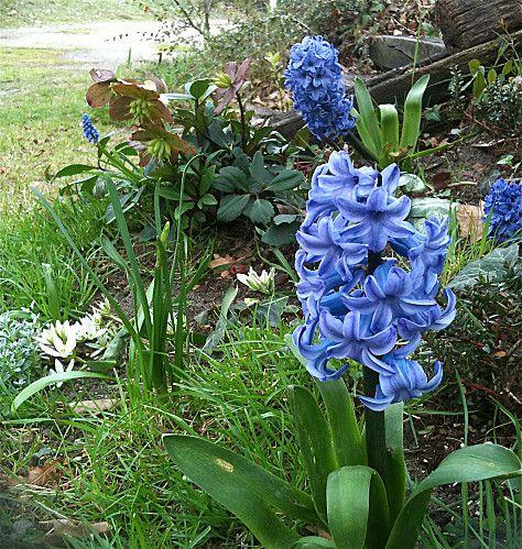 photos-jardin-0207.jpg