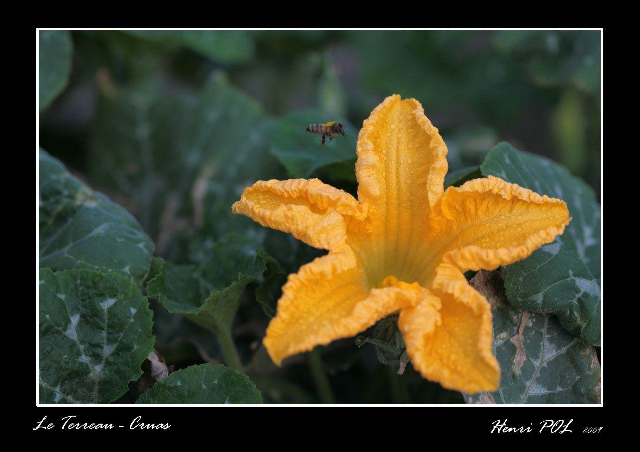 Le Terreau est un jardin de cocagne bio et solidaire avec qui j'ai commencé un travail photo. Les premières images .