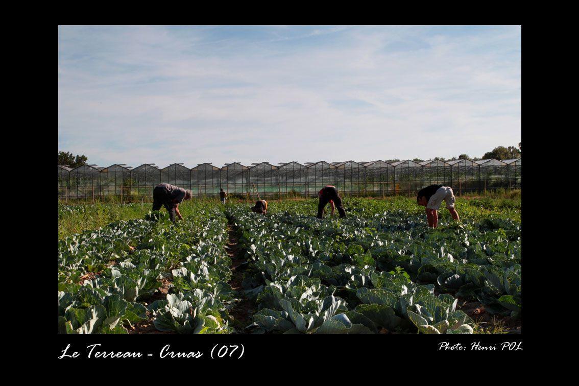 Album le terreau jardin de cocagne cruas 07 henri for Les jardins de cocagne