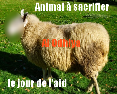 aid-mouton-dossier.png