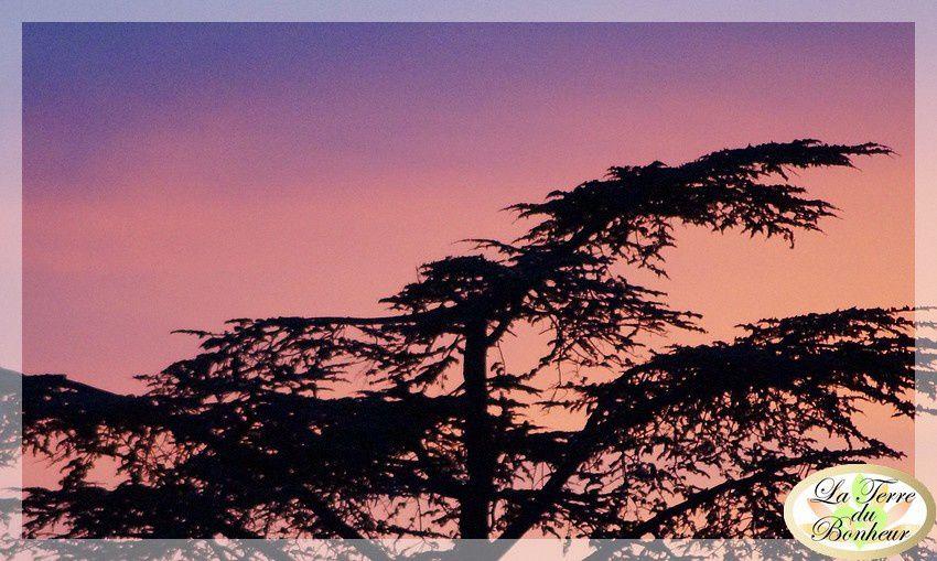 coucher soleil 4