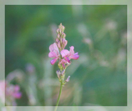 fleurs violettes 2