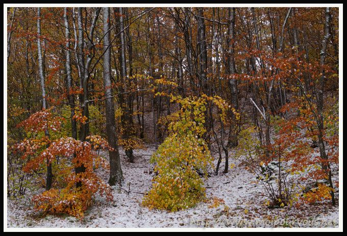 Cezallier-63-Premiere-neige-nov-2013-Feuilles-automne-et-.jpg