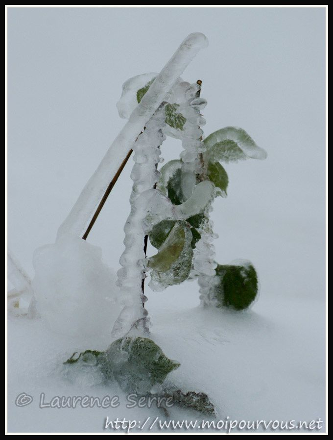 Decoration-naturelle-de-glace.jpg