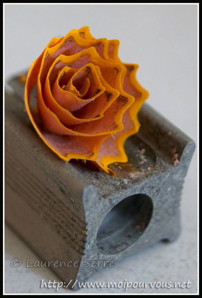 rose-copeaux-taille-crayon.jpg