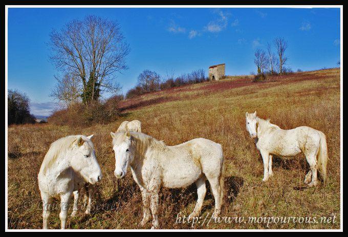 chevaux-tete-a-tete.jpg