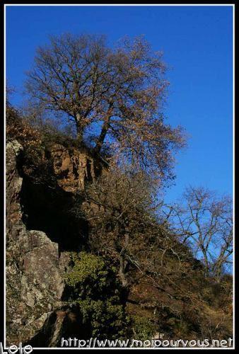rochers-et-arbres-c-te-de-Beaulieu.jpg