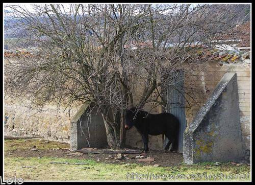 poney-craint-le-vent.jpg