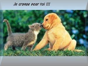 amour-chat-chien.jpg