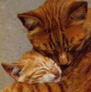 hug-a-cat.jpg