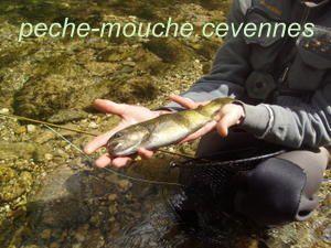http://peche-mouche.cevennes.over-blog.com/
