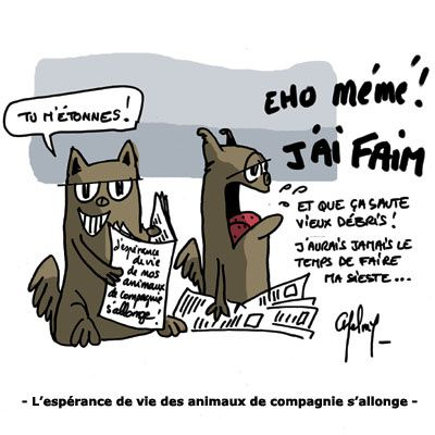 animaux_compagnie.jpg