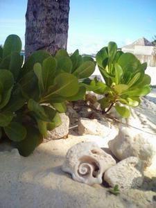 coquillages-villes-plage-nassau-bahamas-647943.jpg