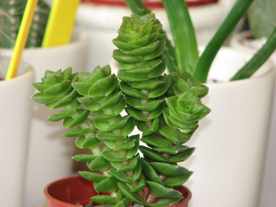 achat plante grasse