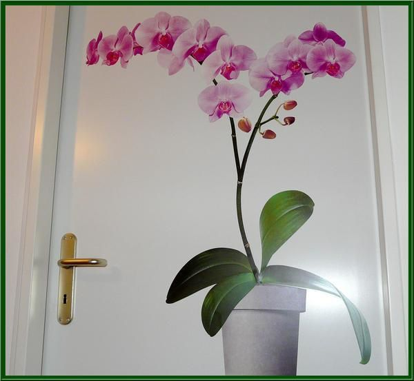 un phalaenopsis en fleurs toute l 39 ann e martine 39 s orchids garden. Black Bedroom Furniture Sets. Home Design Ideas