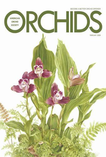 OrchidsFeb2008.jpg