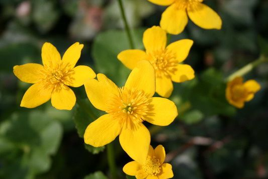 Petites Fleurs Jaunes Plante Grasse Fleur Orange Maison Retraite