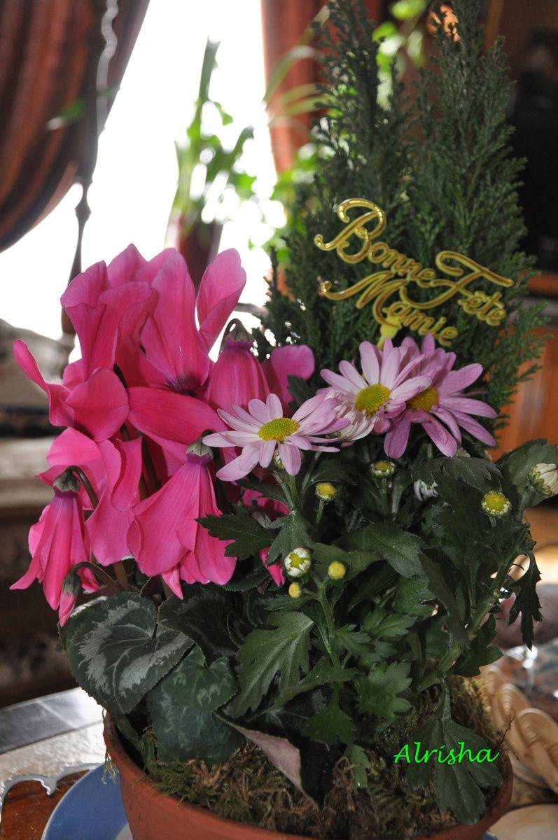 fleurs fête des mamies