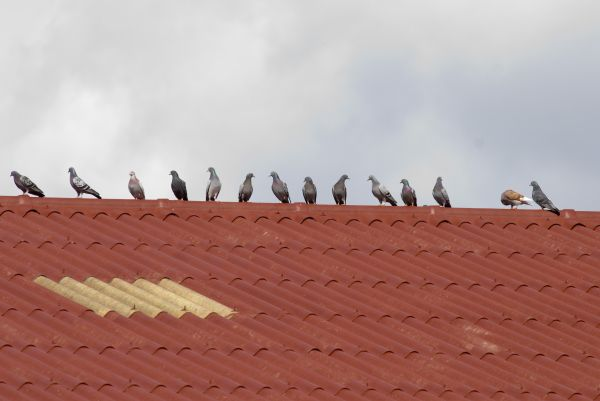 Chats, vaches Highland Cattle dans les Vosges du nord, vaches Prim'holstein et autres,  pigeons alignés sur un toit, lérot, merle, foulques macroule, écureuil, cigogne blanche au nid, corbeaux freux devant une mare, choucas des tours sur une antenne, chevaux, orvet, moineau sur un toit, terrain retourné par des sangliers, hirondelle de cheminée, « nœud » de crapauds communs, Grande aigrette, cygnes tuberculés et leurs petits, corneille, colverts, cerfs, moutons, poule noire.