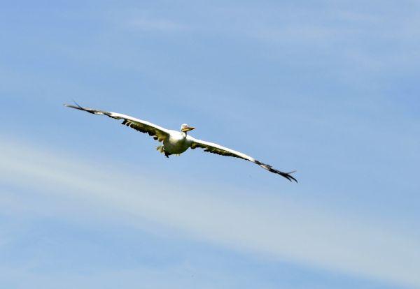 """Oiseaux du """"Parc des oiseaux"""" de Villars-les-Dombes, dans l'Ain"""
