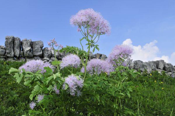Flore, paysages, bouquetins au Creux du Van
