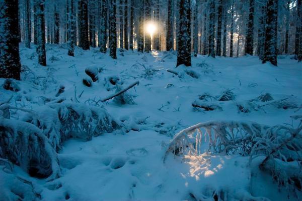 Gueberschwihr, Col du Bonhomme, randonnée dans la neige, Grand Ballon, Conférence anti-éolienne au col du Bonhomme.Vallée de la Doller, Source chaude à Vecoux, randonnée au Kirchberg, vaches sallers, forêts et lumières d'or