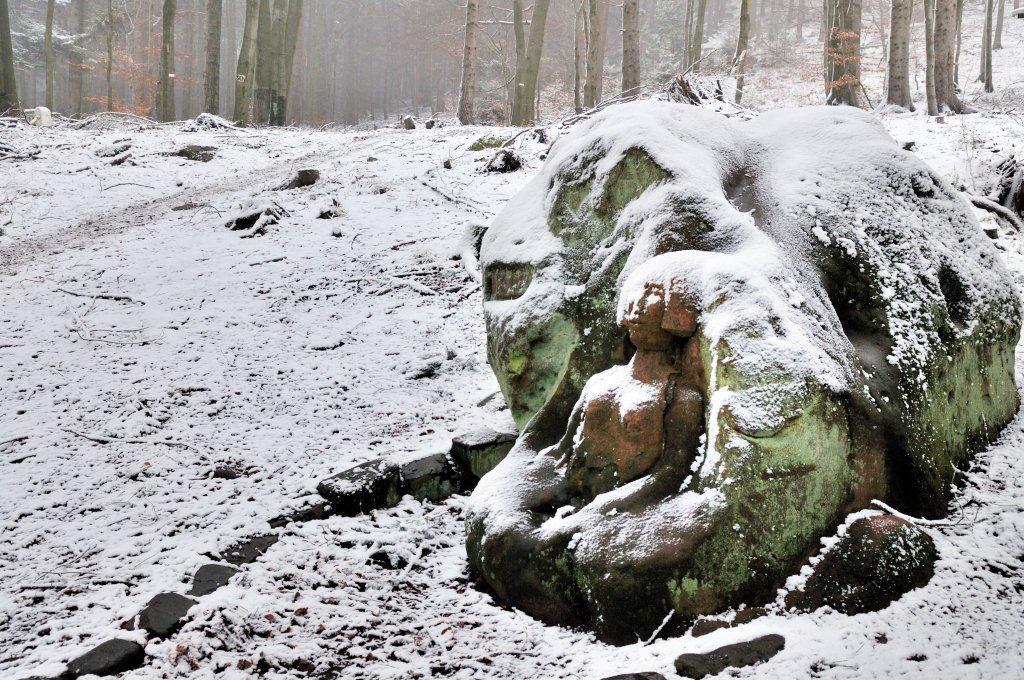 Rochers, châteaux, randonnées dans les Vosges du nord. Claude Kurtz et le faucon pèlerin, Wachtfelsen à Obersteinbach, Wasenbourg à Nierderbronn-les-Bains, Rocher de Diane,Klingenfels et Château du Wasigenstein - Niedersteinbach  Graufthal,  Liese à Niederbronn-les-Bains, Château de Fleckenstein,Le rocher du calice et les derniers feux de l'hiver, au Glashuttenthal (Saint-Louis)