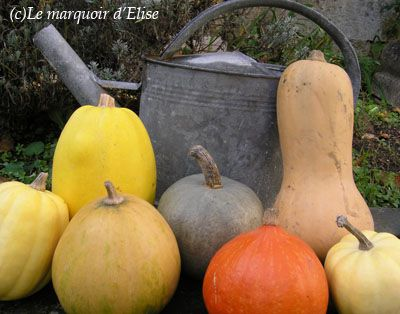 Courges-1.jpg