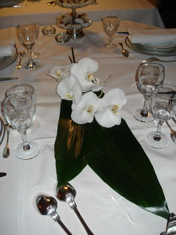 orchid--e.jpg