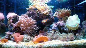 aquarium-marin-5.jpg