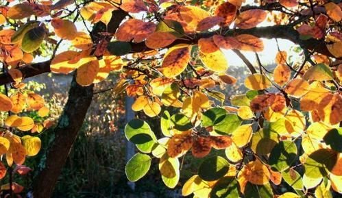 feuilles-automne-thomery-france-5816156269-895486.jpg