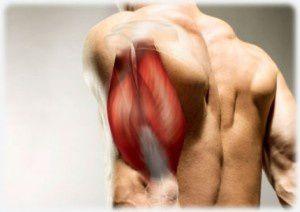 triceps-300x212.jpg