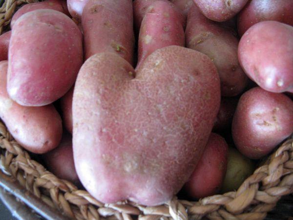 amour-de-patate.jpg