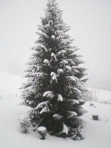 2008-01-12---13---Chutes-de-neige---galette---soleil--St-Gerv--2-.jpg
