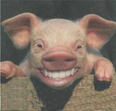 grippe-A-cochon.jpg