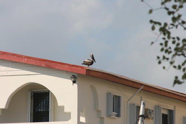quelques images du Belize(février2007)