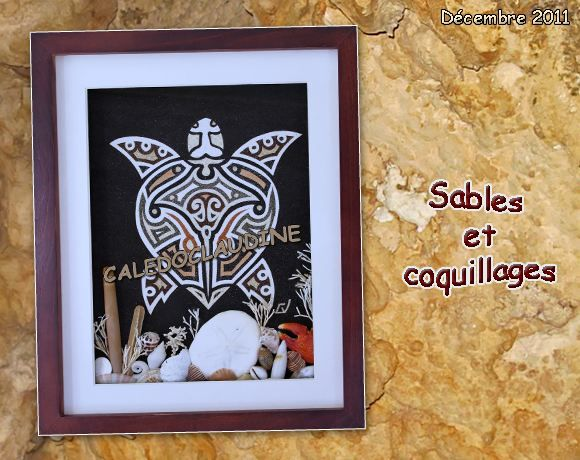 coquillages-blog-decembre11.jpg