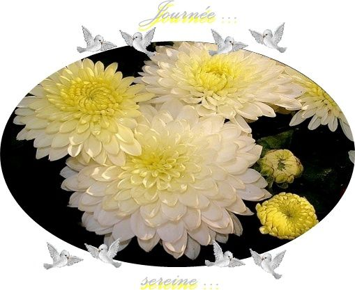 chrysantheme-3.jpg
