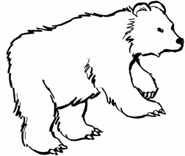 beau-rcoloriage-ours.jpg