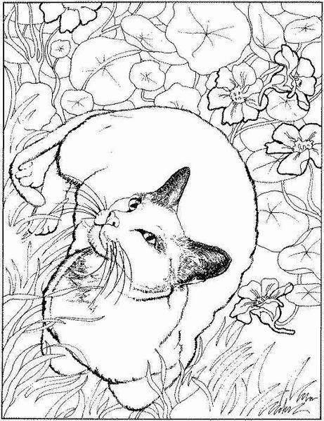 coloriage-chat-siamois-2-gif.jpg